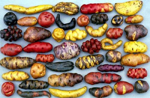 Valik Peruu kartuleid