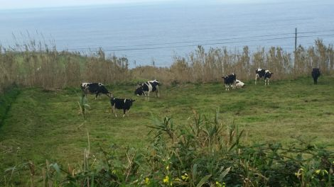 lehmad1